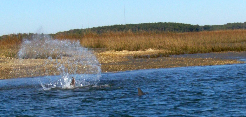 Hilton head fishing charters fishin coach for Hilton head fishing charters